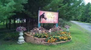 Saddle Up And Visit A Wisconsin Campground That's A Dream For Horse Lovers