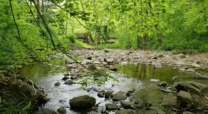Rocky Run Loop Is A Gorgeous Forest Trail In Delaware That Will Take You To A Hidden Overlook