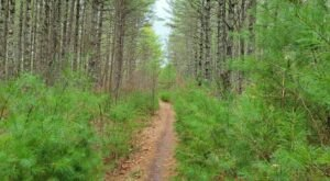 Hike This 6.7 Mile Loop Trail In Exeter Rhode Island For Mind Blowing Natural Beauty