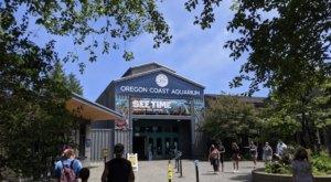 Go On A Prehistoric Adventure At This New Exhibit At The Oregon Coast Aquarium