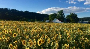 Spend A Wholesome Day At A Working Farm When You Visit Virginia's Homestead Farm At Fruit Hill Orchard