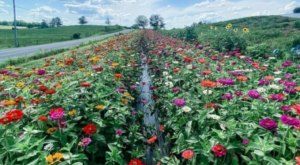 Spend A Wholesome Day Surrounded By Blooms When You Visit Hummingbird Hill Flower Farm In Ohio