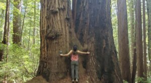 You'll Hike Among The Giants At The Oregon Redwoods Trail