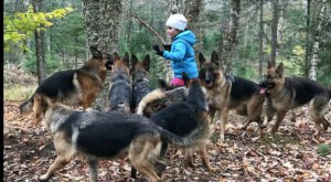 Combine A Love Of Nature And Dogs On This 1.5-Mile Private Guided Hike In Maine