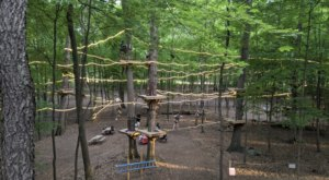 Soar Like An Eagle On TreeRunner Rochester Adventure Park's New Zipline In Michigan