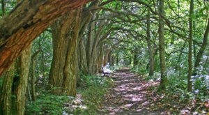 There's Nothing Quite As Magical As The Tunnel Of Trees You'll Find At Sugarcreek MetroPark In Ohio