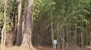 Most People Have No Idea This Enchanting Bamboo Forest In Virginia Even Exists