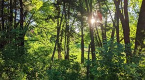 Immerse Yourself In Nature Along A Rare Forest Bathing Trail In Minnesota's Silverwood Park