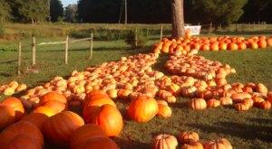 This Hidden Gem Georgia Farm Offers U-Pick Pumpkins, Apple Donuts, & A Cow Train