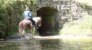 Take A Guided Horseback Ride Through Great Smoky Mountains National Park With Smokemont Riding Stables In North Carolina