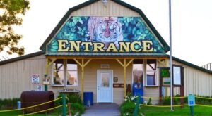 One Of The Most Incredible Small Businesses In Arkansas, Turpentine Creek Wildlife Refuge Is A Haven For Big Cats