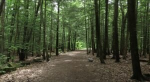 The Solution For Your Stress Is This Guided Walk Through The Maine Woods