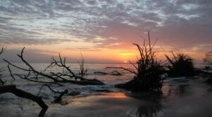This 1-Mile Trail In Florida Leads To A Black Rock Beach With Mountains Of Driftwood