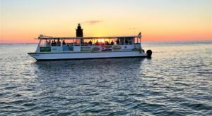 Playful Dolphins Escort You Through The Delaware Bay On This One Of A Kind Boat Tour