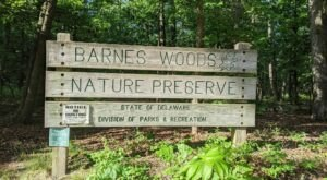 Walk Through Untouched Old Growth Forest At Delaware's Barnes Woods Nature Preserve