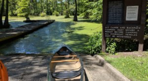 Visit A Submerged Enchanted Forest At Merchants Millpond State Park In North Carolina