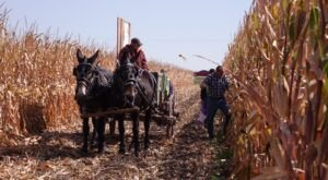 The Unique Fall Festival In Nebraska You Won't Find Anywhere Else
