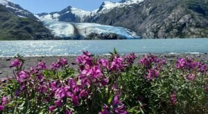 Hike High Above The Treeline And Spot Portage Glacier On This Beautiful Trail In The Chugach National Forest