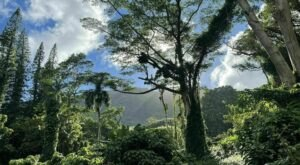 Hiking At Manoa Falls Trail In Hawaii Is Like Entering A Fairytale