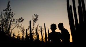Take A Self-Guided Nighttime Stroll Through Arizona's Desert Botanical Garden With Flashlight Nights