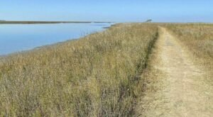 The Galveston Island State Park Trail In Texas Takes You From The Bay To The Beach And Back