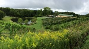 Located On Reclaimed Mine Land, Mountain Rose Vineyards Serves Delicious Virginia Wine Worth Sampling