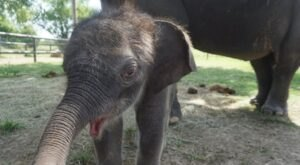 You Can't Stay Away From The Endangered Ark Foundation In Oklahoma, Home To The Largest Herd Of Asian Elephants In America