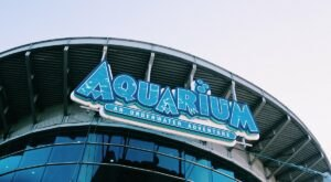 The Downtown Aquarium In Colorado Has Officially Been Named One Of The Best In The Country