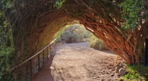 Boyce Thompson Arboretum Features A Tunnel Of Trees In Arizona And It's Positively Magical