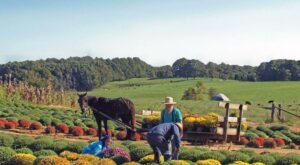 The Tiny Amish Town In Kentucky That's The Perfect Day Trip Destination