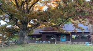 Dine In The Shade Of An 800-Year-Old Tree At The Oak Restaurant In West Virginia