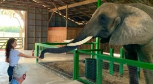 You'll Never Forget A Visit To Myakka Elephant Ranch, A One-Of-A-Kind Elephant Ranch In Florida