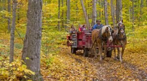 Knaebe's Apple Farm In Michigan Serves Cider, Wood-Fired Pizza, And Classic Fall Fun