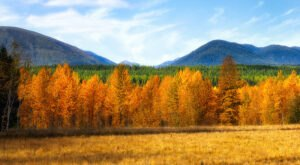 When And Where To Expect Montana's Fall Foliage To Peak This Year