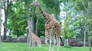 Saint Louis Zoo In Missouri Is One Of The Nine Best Zoos In The U.S., According To Travel & Leisure