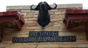 You Could Spend Hours Looking At Critters At The Werner Wildlife Museum In Wyoming