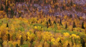 When And Where To Expect South Dakota's Fall Foliage To Peak This Year
