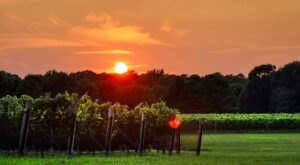 Visit The Largest Winery In Virginia, Williamsburg Winery, For A Day Of Delicious Wine Tasting