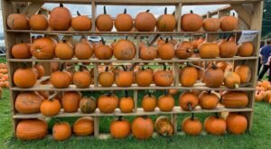 An Autumn Trip To Abbott Farms In New York Is A Classic Fall Tradition