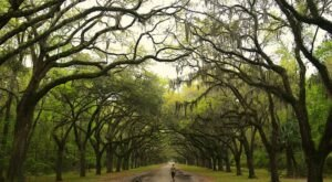 There's Nothing Quite As Magical As The Tunnel Of Trees You'll Find At Wormsloe Historic Site In Georgia