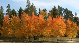 When And Where To Expect Wyoming's Fall Foliage To Peak This Year