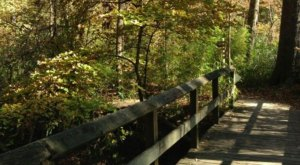 Explore over 5 Miles Of Trails At The Scenic Walter B Jacobs Park In Louisiana