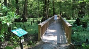 Take An Easy Loop Trail To Enter Another World At The Greenville Cypress Preserve In Mississippi
