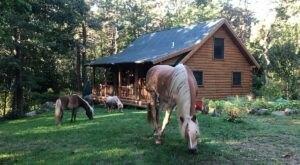 Sleep Among The Trees At Dogtown Cabin At Applecart Farm In Massachusetts