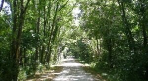There's Nothing Quite As Magical As The Tunnel Of Trees You'll Find At Katy Trail State Park In Missouri