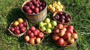 Nothing Says Fall Is Here More Than A Visit To Pittsburgh's Charming Apple Orchard