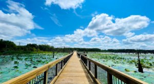 Get Away From It All Along The Nature Trails At The Black Bayou National Wildlife Refuge In Louisiana
