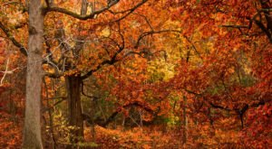 When And Where To Expect Pennsylvania's Fall Foliage To Peak This Year