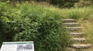A Mysterious Woodland Trail In Arkansas Will Take You To The Van Winkle Ruins