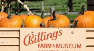 Learn About Cows And More When You Visit Billings Farm And Museum In Vermont